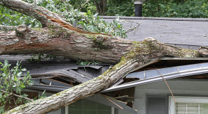 Only Right Tree Removal Service can save your property