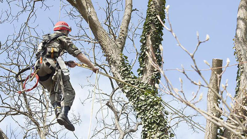 How to conduct best DIY tree pruning?