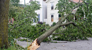 Tree Pruning – Essential Tips To Follow